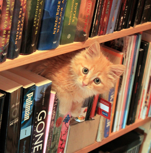 famous cats from literature