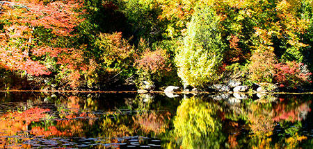 rockery-in-fall_gallerymedium