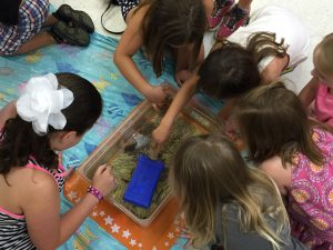"Kids' couldn't get enough of ""Tidepools Alive"" when the New England Aquarium came to visit the South Branch."