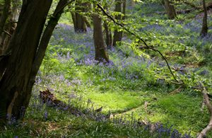 Image from ashdownforest.com